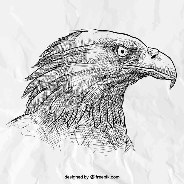 Disegnato testa dell'aquila a mano Vettore gratuito