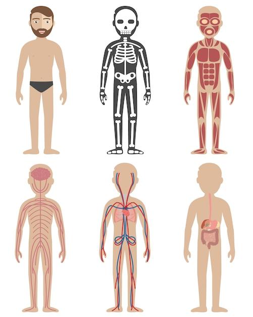 Disegni di anatomia umana Vettore gratuito