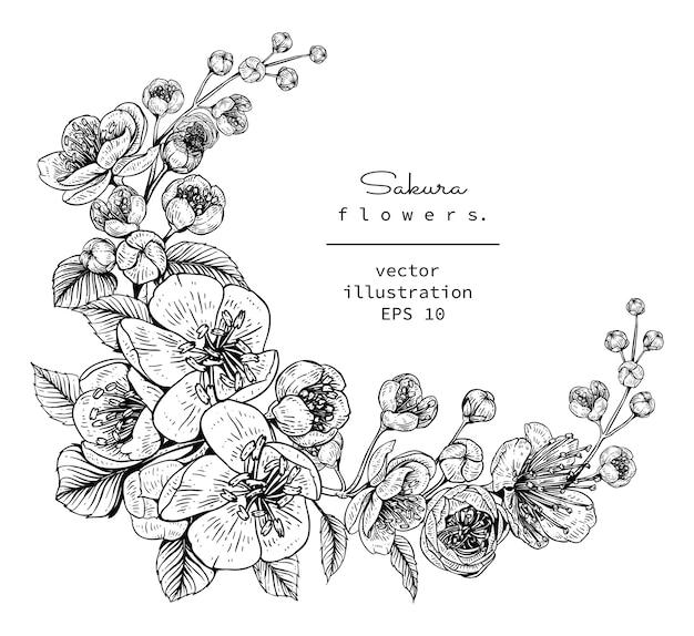 Disegni Di Fiori.Disegni Di Fiori Di Ciliegio Sakura Vettore Premium