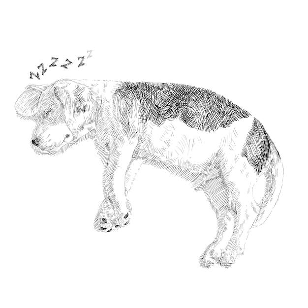 Cane Che Dorme Disegno.Disegno Del Beagle Adorabile Che Dorme Su Fondo Bianco Vettore