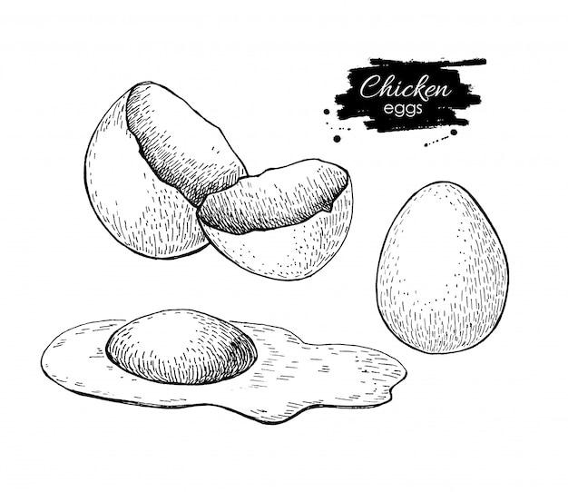 Disegno di uova di gallina Vettore Premium