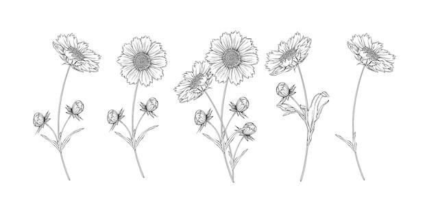 Disposizione dei fiori di contorno in bianco e nero di vettore con i fiori della camomilla Vettore Premium