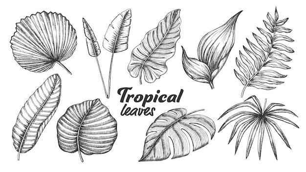Diverse foglie tropicali Vettore Premium