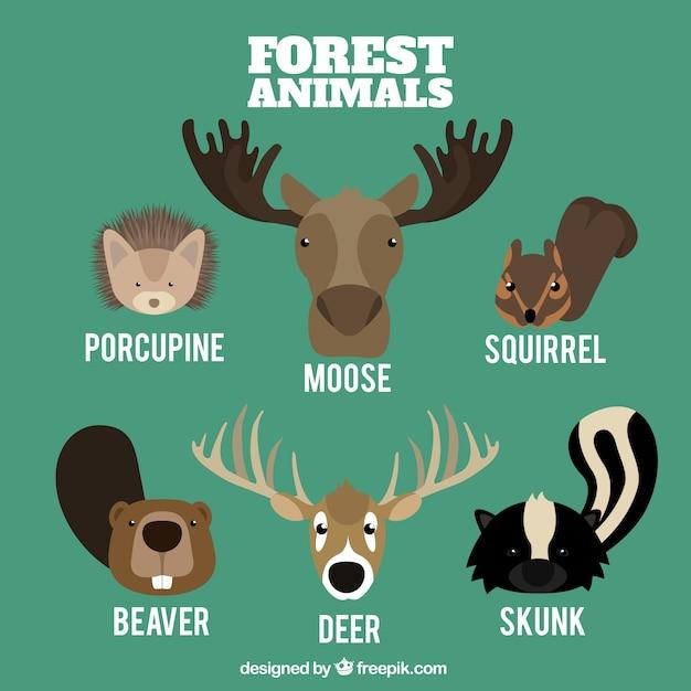 Diversi animali della foresta in stile piatto Vettore gratuito