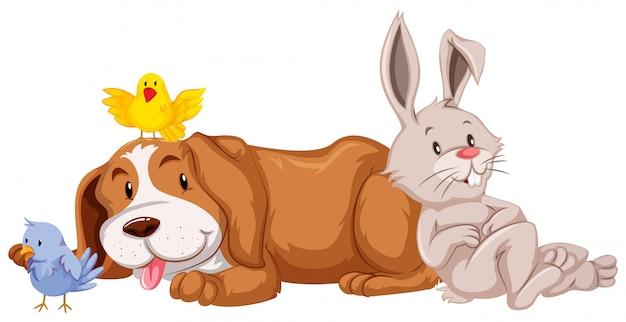 Diversi tipi di animali domestici su sfondo bianco Vettore gratuito