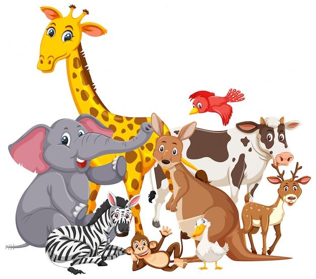 Diversi tipi di animali selvatici Vettore Premium