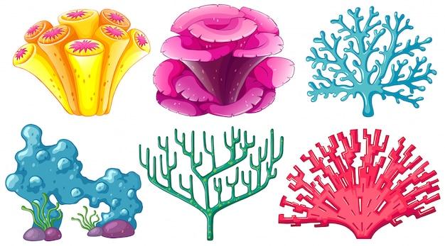 Diversi tipi di barriera corallina Vettore gratuito