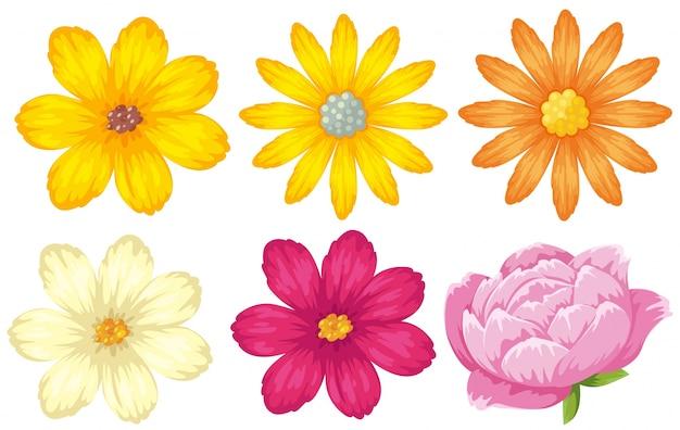Diversi tipi di fiori in giallo e rosa scaricare vettori for Tipi di fiori