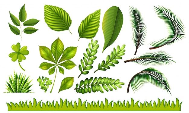 Diversi tipi di foglie verdi e illustrazione erba - Diversi tipi di erba ...