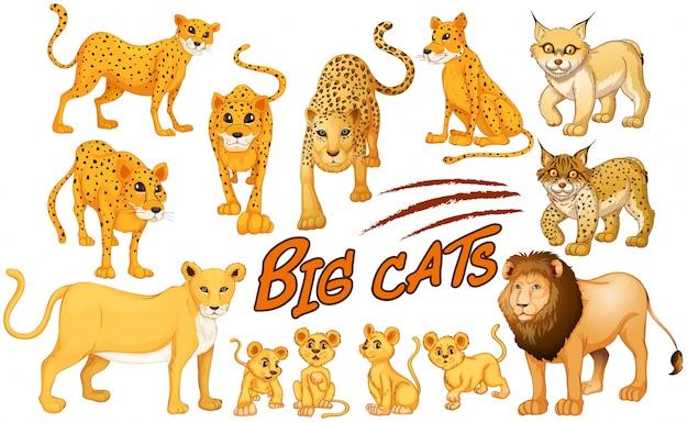 Diversi tipi di illustrazione di leone e tigre Vettore gratuito