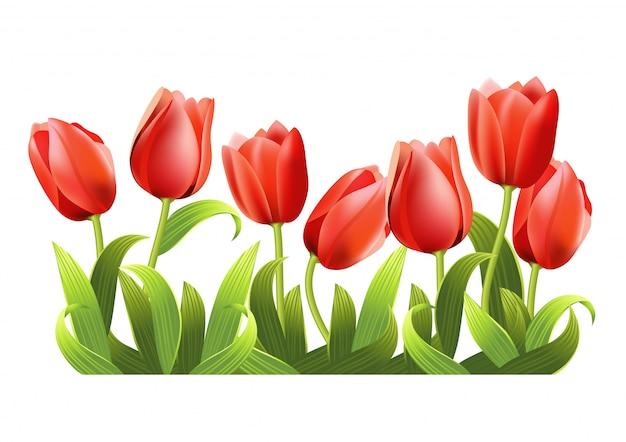 Diversi tulipani rossi in crescita realistici. Vettore gratuito