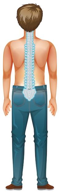 Dorso di maschio umano con mal di schiena Vettore Premium