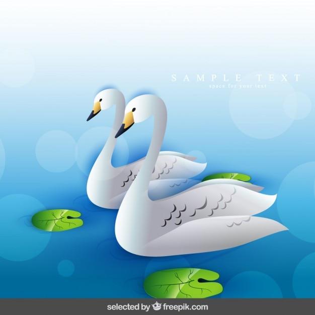 Due cigni nuotare Vettore gratuito