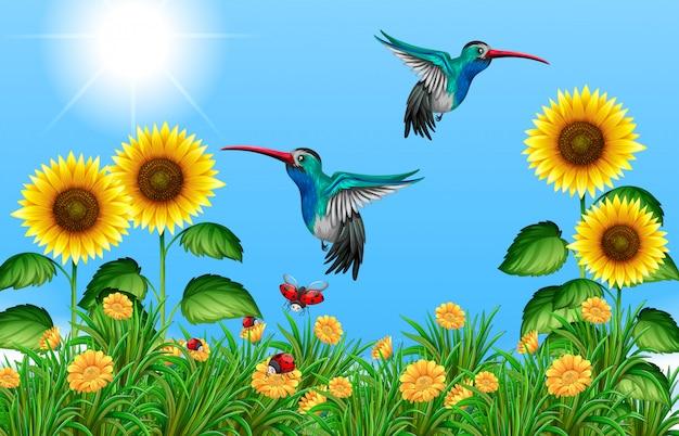 Due colibrì che volano nel campo di girasole Vettore Premium