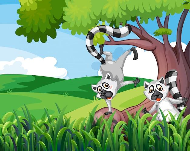 Due lemuri giocosi nella foresta Vettore gratuito