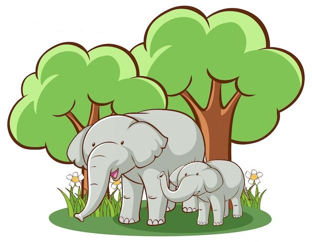 Elefanti su sfondo bianco Vettore gratuito