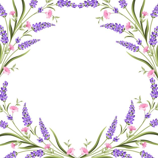 Elegante carta con fiori di lavanda. Vettore Premium
