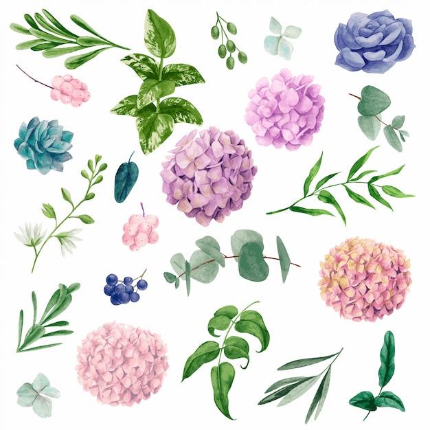 Elementi botanici dell'acquerello, illustrazione disegnata a mano Vettore Premium