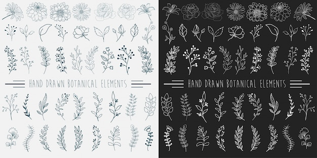 Elementi botanici disegnati a mano Vettore Premium