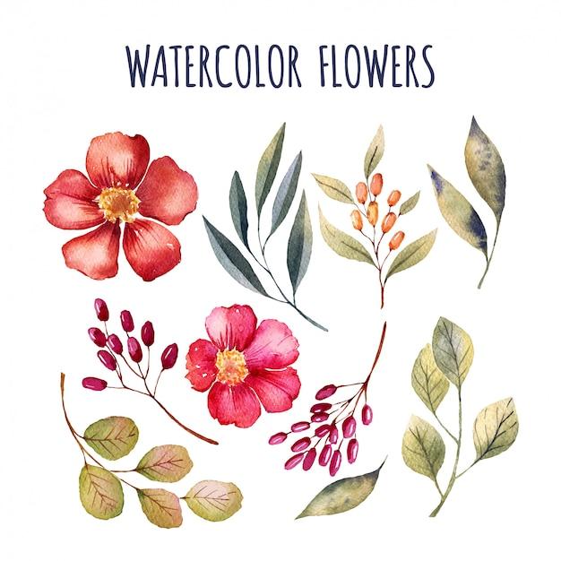 Elementi di fiori ad acquerelli Vettore Premium
