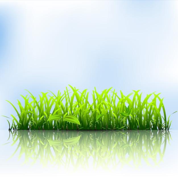 Erba verde Vettore Premium