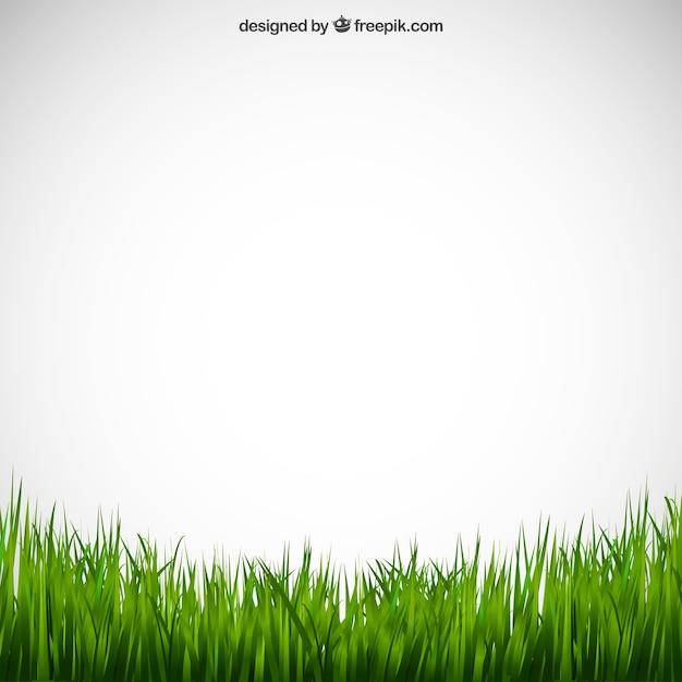 Erba verde Vettore gratuito