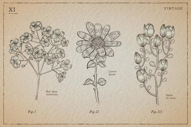 Erbe botaniche e fiori selvatici in stile vintage Vettore gratuito