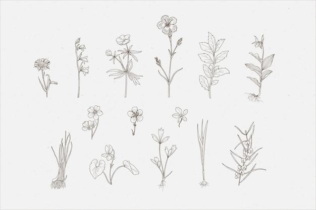 Erbe botaniche e fiori selvatici Vettore gratuito