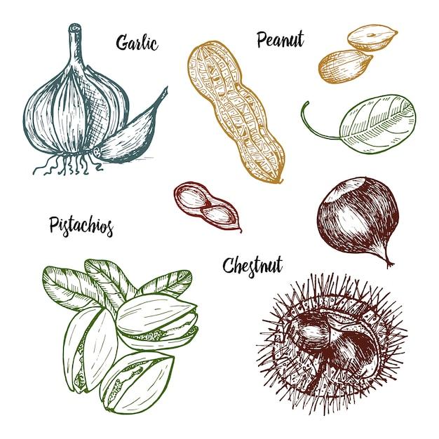 Erbe, condimenti e spezie. pistacchi e aglio, arachidi e castagne, semi per il menu. Vettore Premium
