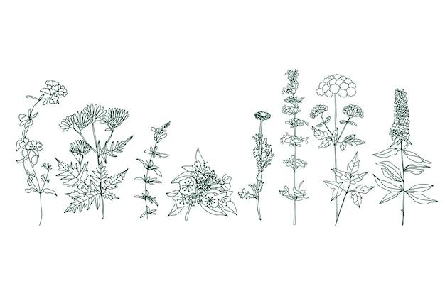 Erbe disegnate a mano realistiche e fiori selvatici Vettore gratuito