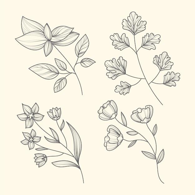 Erbe e fiori disegnati a mano Vettore gratuito
