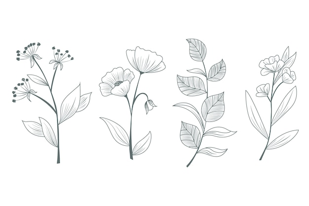 Erbe e fiori selvatici disegnati a mano per gli studi Vettore gratuito