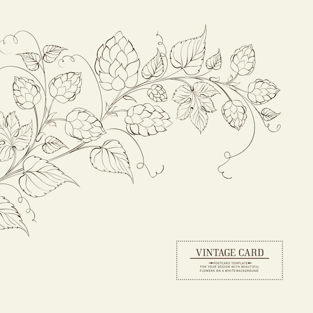 Etichetta di luppolo botanico. Vettore Premium