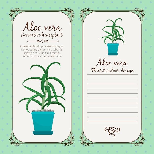 Etichetta vintage con pianta di aloe vera Vettore Premium