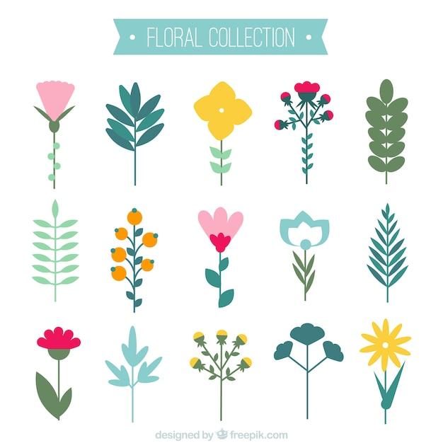 Fantastica collezione di diversi tipi di fiori scaricare for Tipi di fiori