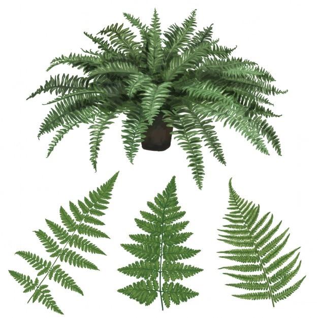 Fern e foglie di felce disegnata a mano illustrazione vettoriale Vettore gratuito
