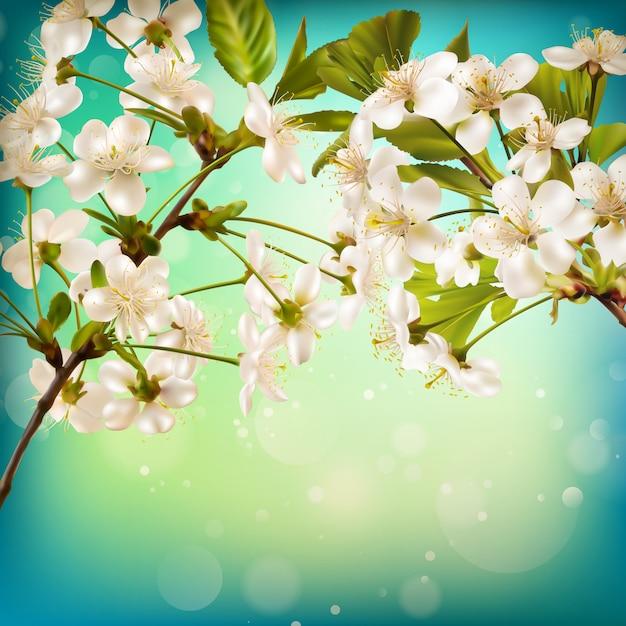 Fiore del fiore di ciliegia su fondo blu. Vettore Premium
