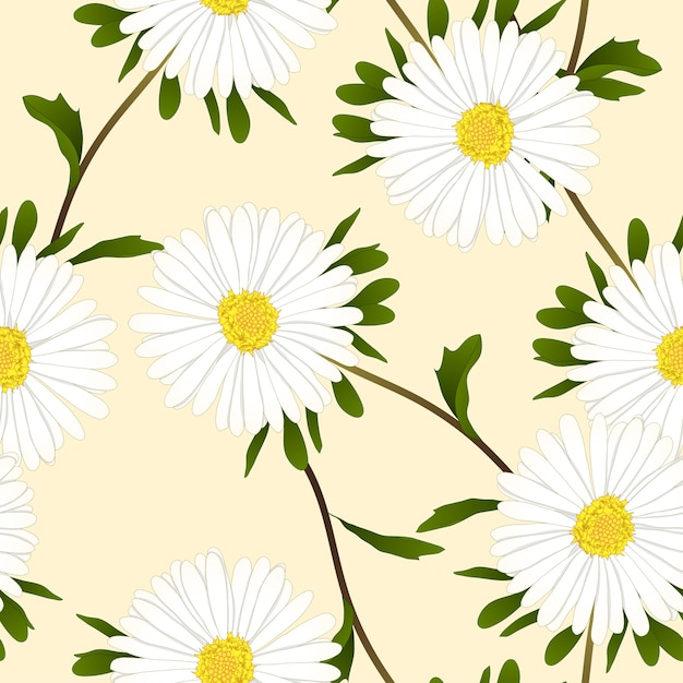 Fiore Di Aster Bianco Su Sfondo Beige Avorio Scaricare Vettori Premium