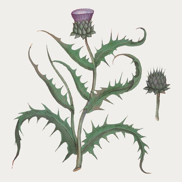 Fiore di carciofo in stile vintage Vettore gratuito