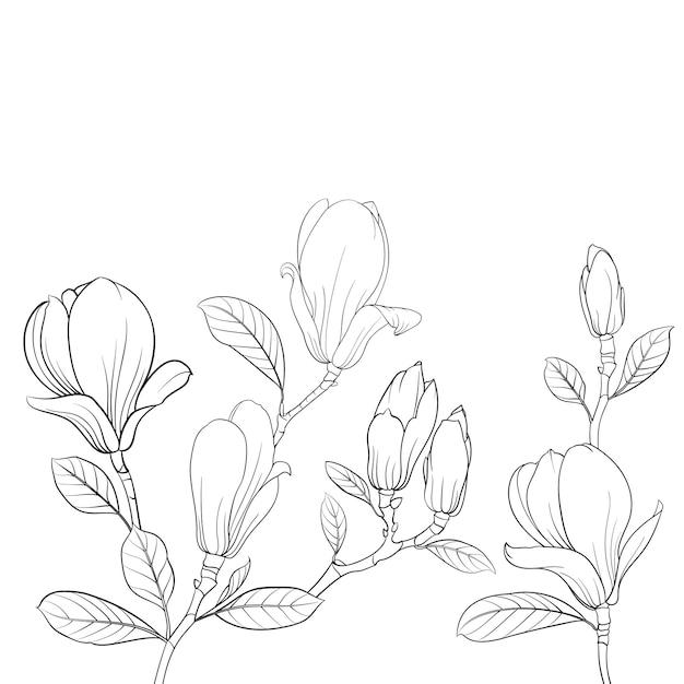Fiore di magnolia in fiore Vettore Premium