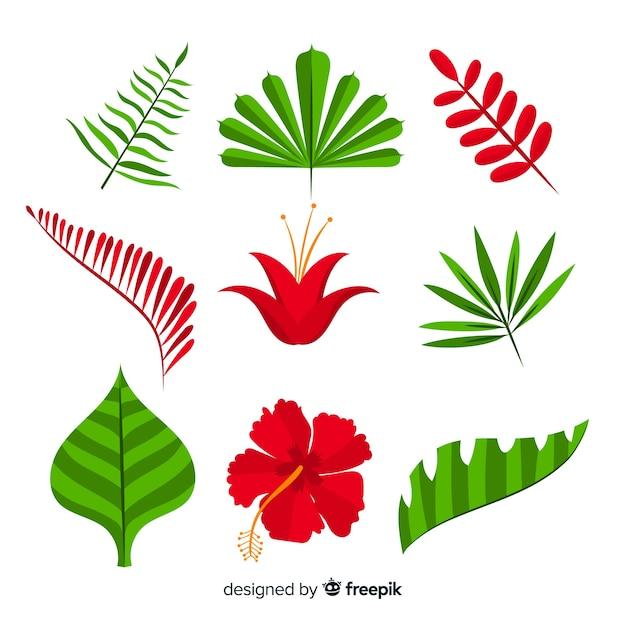 Fiori e foglie tropicali Vettore gratuito