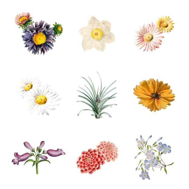 Fiori in fiore Vettore gratuito