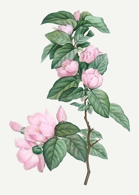 Fioritura di fiori rosa Vettore gratuito