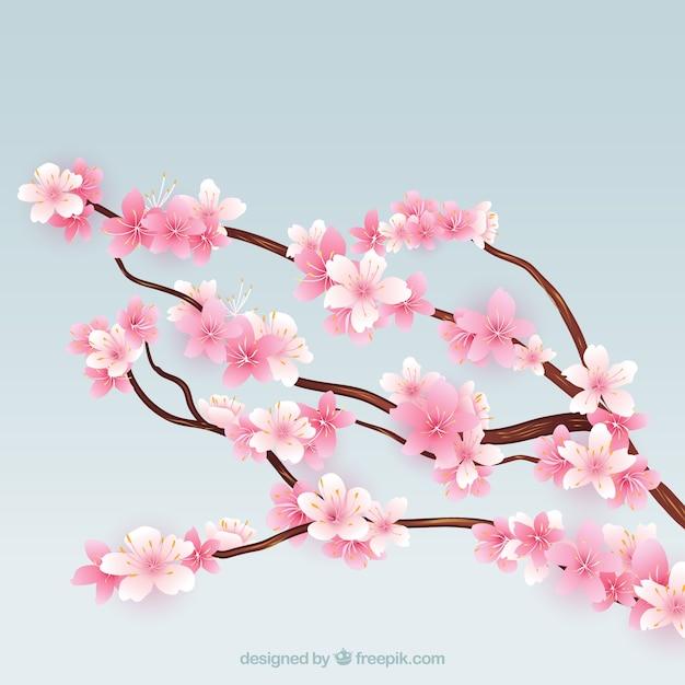 Fioritura rami di un albero di ciliegio scaricare for Albero ciliegio