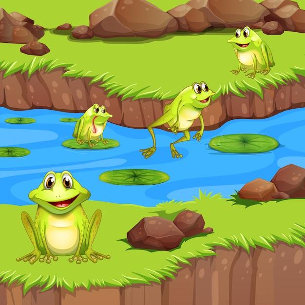 Flog vivono nello stagno del fiume Vettore Premium