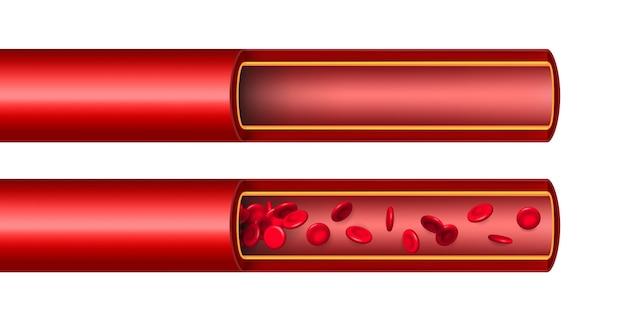 Flusso di flusso dei globuli rossi dell'arteria, nave. Vettore Premium