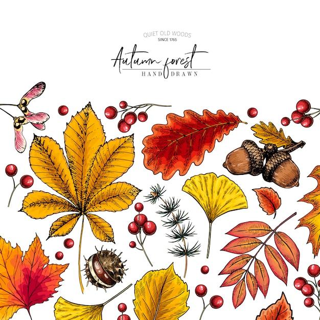 Foglia d'autunno disegnata a mano foglie di albero colorato vettoriale. Vettore Premium