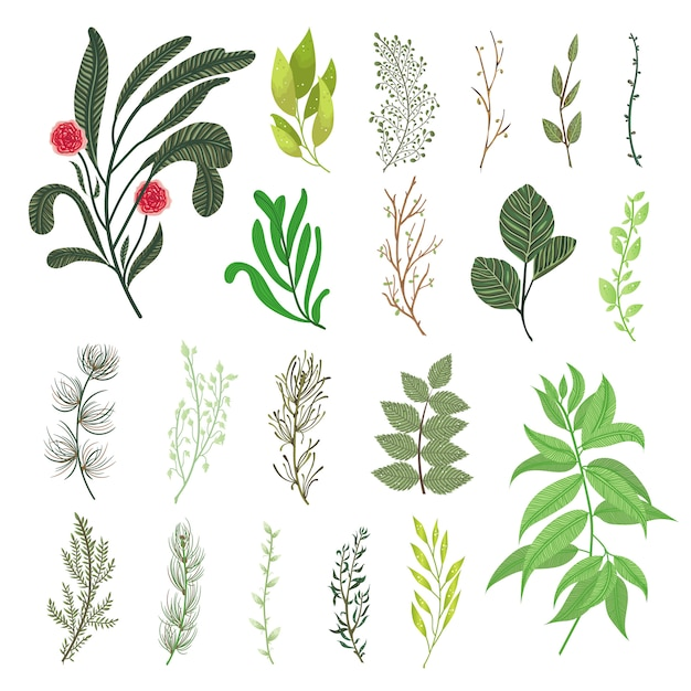 Fogliame di foglie verdi foresta tropicale foglie set vettoriale elementi naturali fogliame. illustrazione di disegno vettoriale botanico decorativo Vettore gratuito
