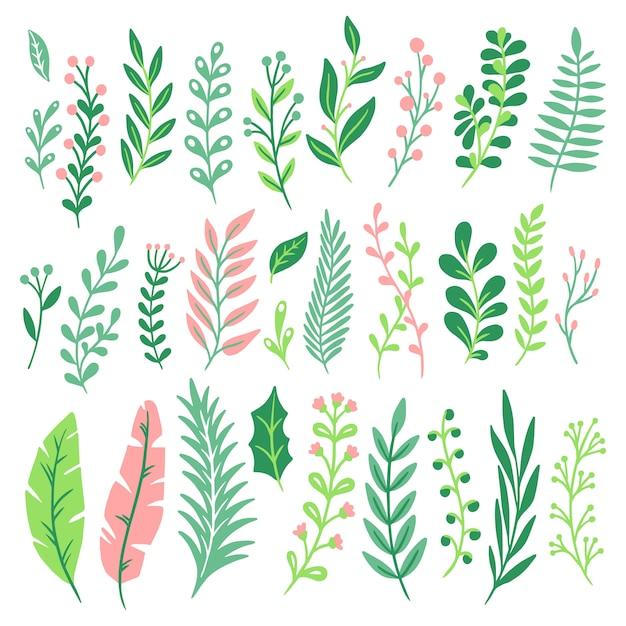 Foglie decorative. la foglia della pianta verde, la pianta delle felci e le foglie naturali floreali della felce hanno isolato l'insieme Vettore Premium