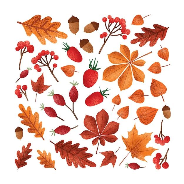 Foglie di autunno cadute dell'albero o fogliame secco, ghiande, noci, illustrazione delle bacche. Vettore Premium